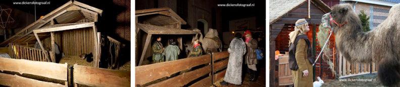 Levende Kerststal Verhuur, gezellige stal met veel dieren in een ruimte omringd met hekken, www.kerstacts.nl